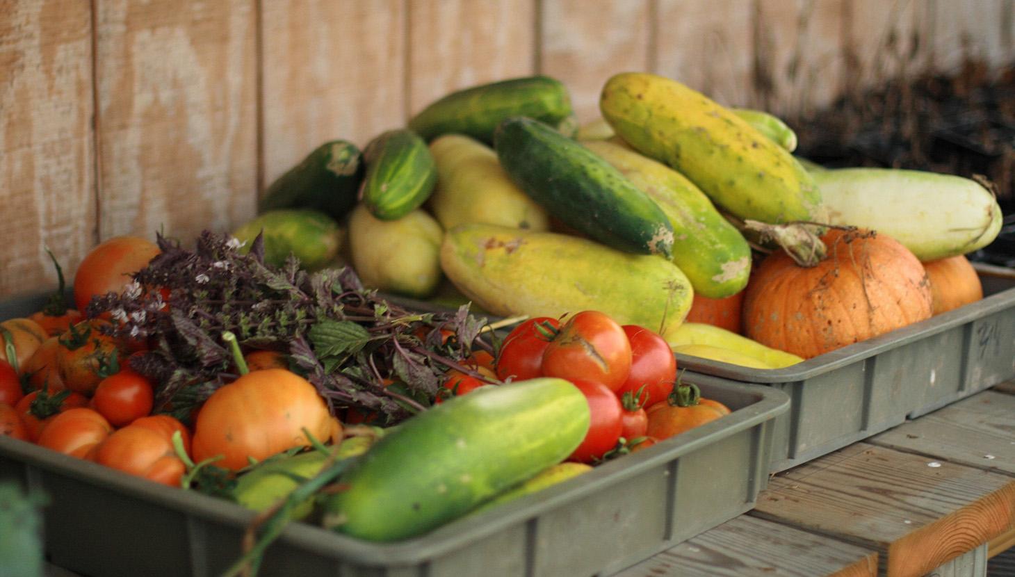 veg-fruit-1460